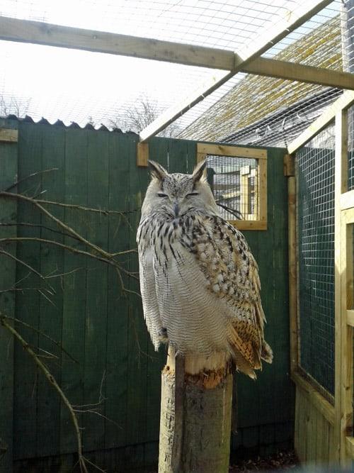 Owl at the Scottish Owl Centre